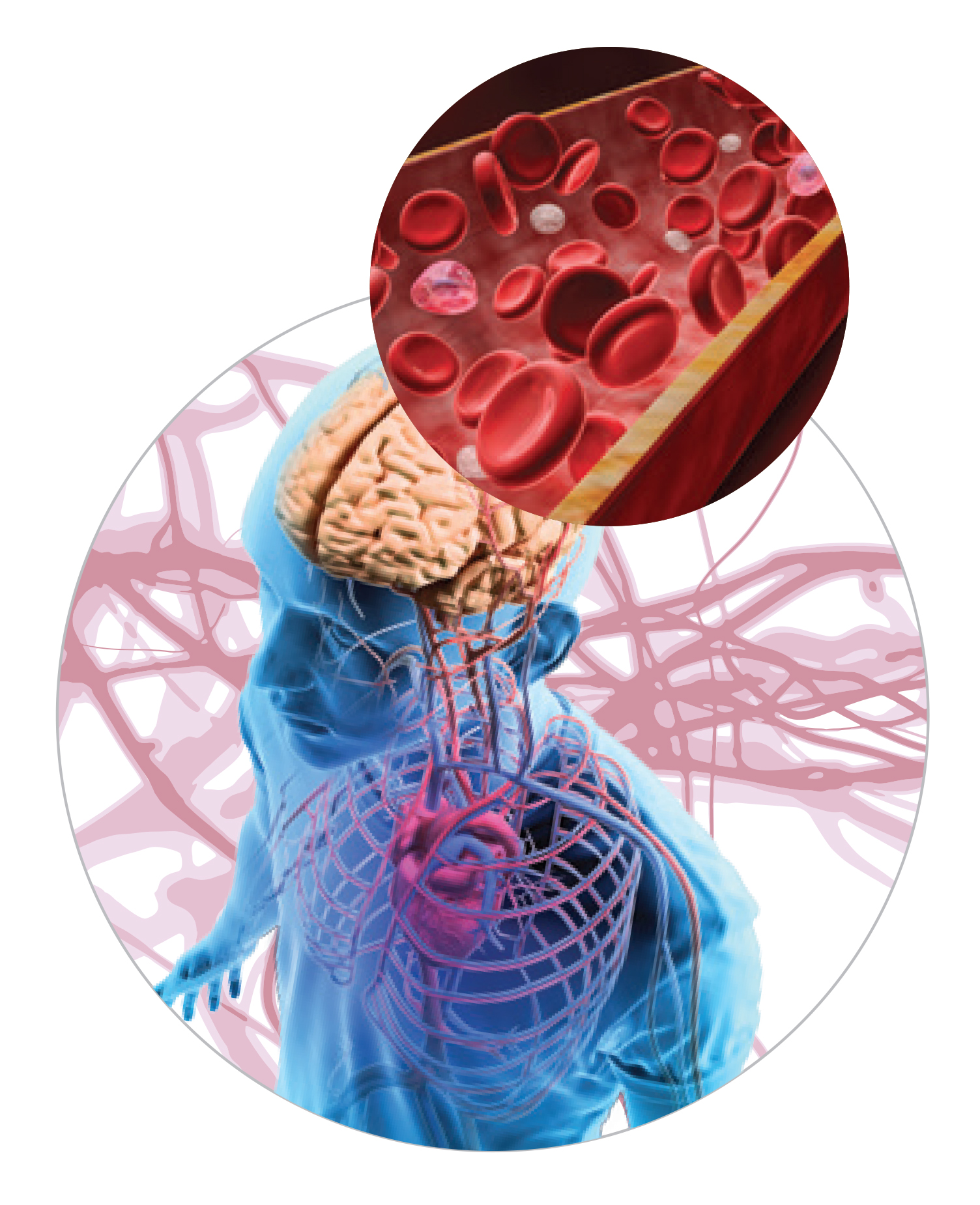 New Insights Into the Blood-Brain Barrier – Cure Alzheimer\'s Fund